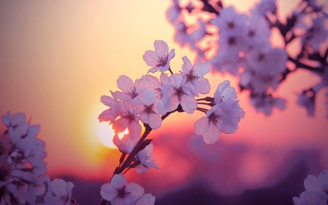 picture-of-flowers-blooming